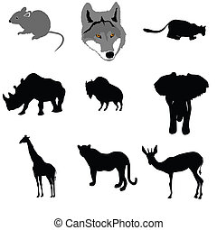 grey mouse,lioness,rhinoceros,buffalo,elephant,giraffe,leopard,a