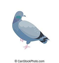 Grey pigeon flat vector illustration. Bird with dark plumage...
