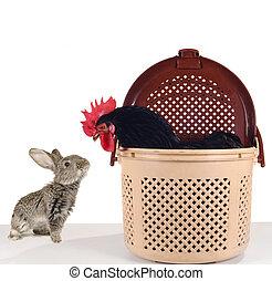 grey  rabbit and  black cock