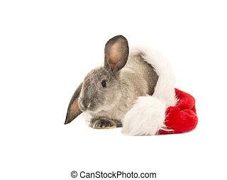 Grey rabbit in santa's hat on a white background