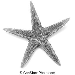 Grey seastar, isolated on white background.