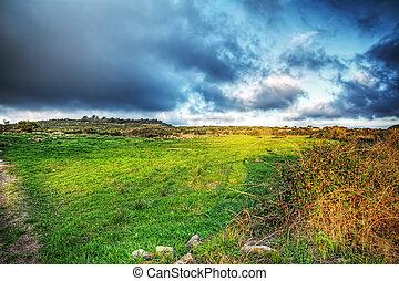 grey sky over a green meadow