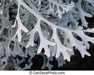 grey soft plant close up