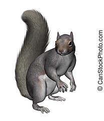 Grey Squirrel - Grey squirrel, 3d digitally rendered...