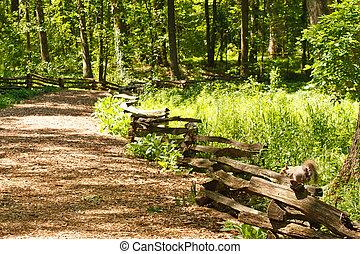 Grey Squirrel on Split Rail Fence in Forest