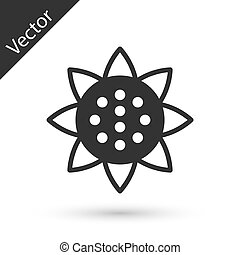 Grey Sunflower icon isolated on white background. Vector