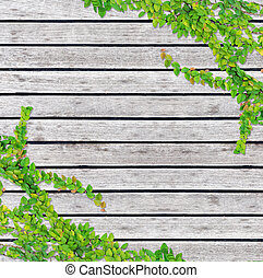 Grey wood texture background