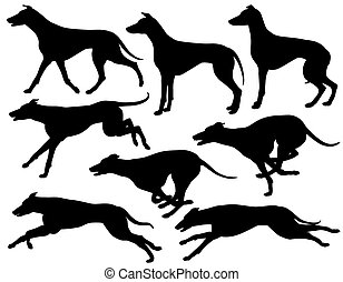 Set of eps8 editable vector silhouettes of greyhound dogs running, standing and trotting