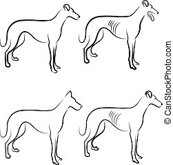 Greyhound dogs logo vector