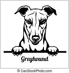 Greyhound - Peeking Dogs - breed face head isolated on white