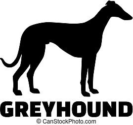 Greyhound with breed name