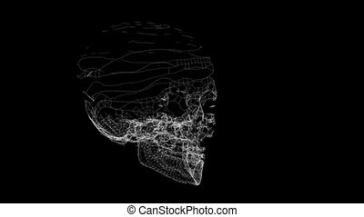 Grid of Human Skull animation. Futuristic wireframe skull...