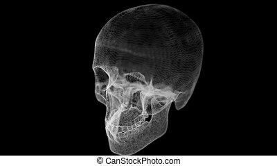 Grid of Human Skull