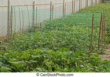grid on garden beds with green plants near the fence