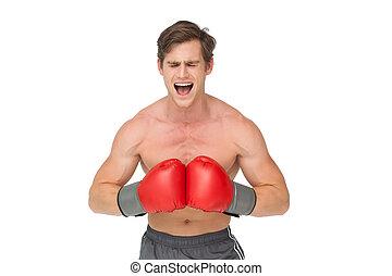 gridare, muscly, pugilato, uomo, guanti, rosso, il portare