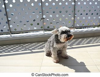 griesgrämig, hund, genießen, sie, sonnenbräune, in, heiß, sonnig, sommer, wetter
