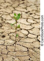 grieta, suelo, crecer, seco, planta