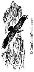 griffon, buitre, pájaro