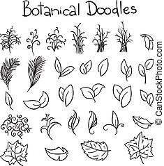 griffonnage, ensemble, botanique