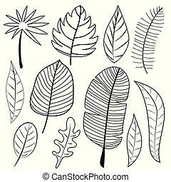 griffonnage, feuilles, vecteur, set., illustration.