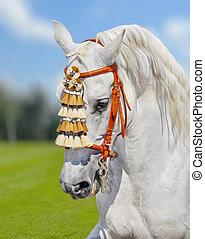 grigio, andalusian, cavallo, spagnolo, decorazione