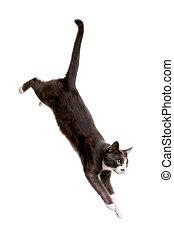 grigio, saltare, serie, gatto
