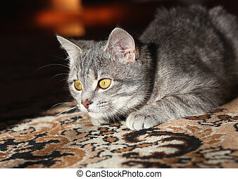 grijs, aanval, het bereiden, kat