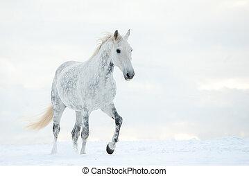 grijs, dapple, paarde, winter