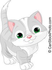 grijs katje, schattig