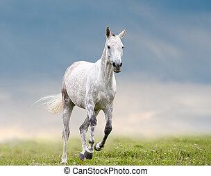grijs, looppas, dapple, paarde, vrijheid