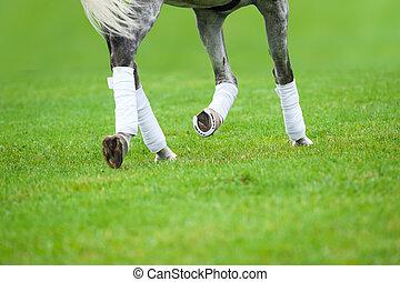 grijs, paarde, les, dressage
