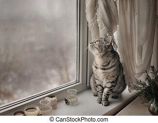 grijze kat, in, de, winter, venster