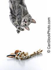grijze kat, voordeel, spelend, omlaag.