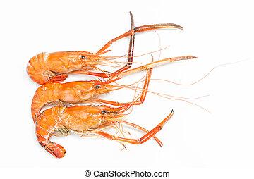Grilled giant freshwater prawn isolated on white background