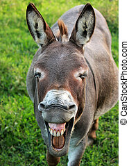 Grinning Donkey - Donkey with squinting eyes and pursed lips...