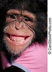 grinsen, schimpanse