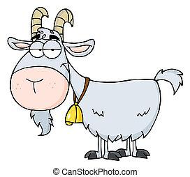gris, chèvre