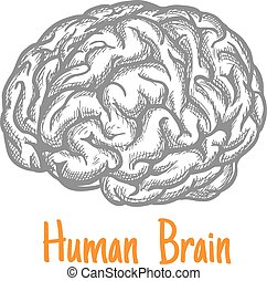gris, croquis, symbole, cerveau, couleurs, humain