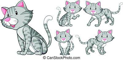 gris, différent, chat, actions