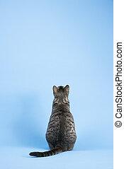 gris, dos, cat., vue