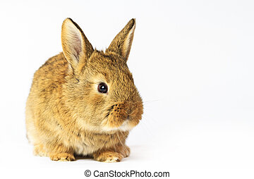 gris, fondo blanco, conejo