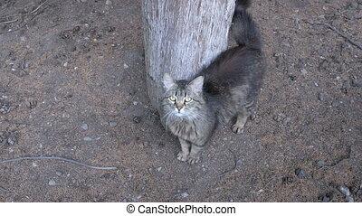 gris, marche, arbre, parc, chat, sdf
