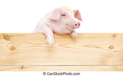 gris, med, bord