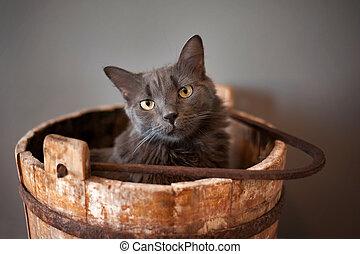 gris, nebelung, gato, en, cubo de madera