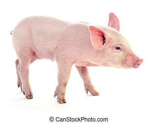 gris, på, white.