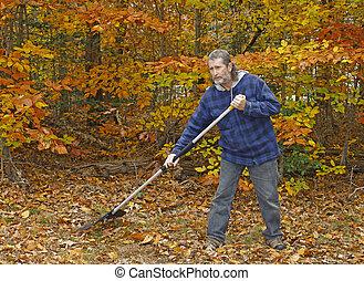 gris, yard, chevelure, feuilles, long, dehors, ratisser, mûrir, automne, homme, jour, barbe