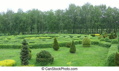 Topiary part of the garden, in the botanical garden named after Grishko, Kyiv. Aerial view. The boxwood bushes and prizes are cut into geometric shapes and form a labyrinth.