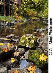 grist, riacho, folhas, cedro, outono, Moinho,  Maple