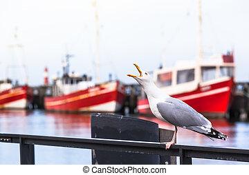 grito, de, um, gaivota