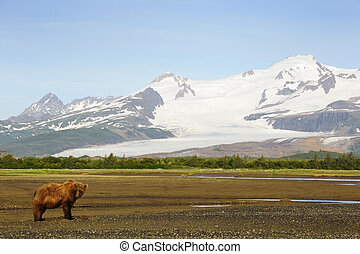 Grizzly Bear in landscape with snowcapped mountais